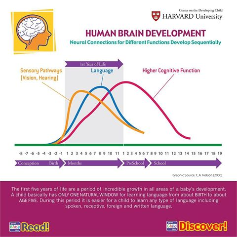 humanbraindevelopment